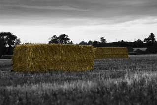 Hay Bales - Colour Popped