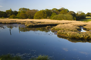Warsash Marshes
