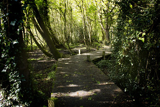 Brownwich Woods Boardwalk