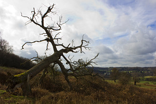 Fallen Tree, Eastnor...