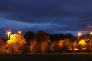 Autumn Trees at Night