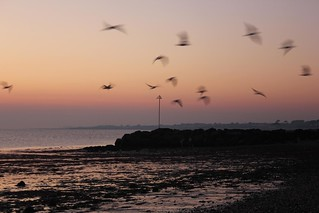 Sea Birds & Sunset at...