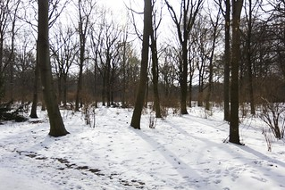 Snow in the Tiergarten