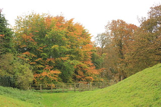 Autumn Colors in Ludgershall