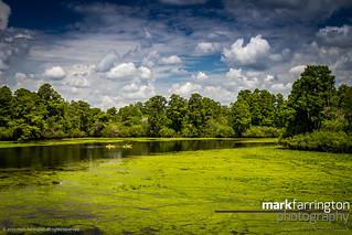 View Across Lettuce Lake