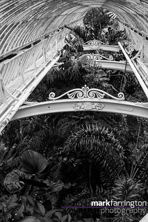Palm House Walkway